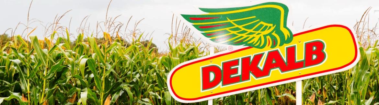 Ottieni la combinazione di ibrido & densità di DEKALB perfetta per il tuo campo!